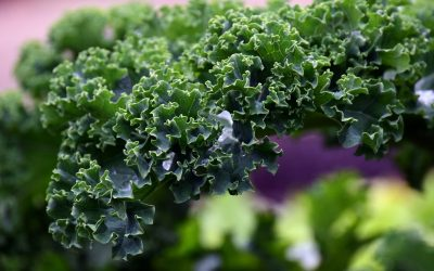 WHAT TO DO WITH YOUR WINTER VEGGIES